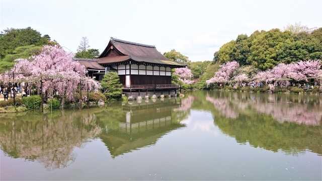 wisata di Kyoto Sakura Heian Jingu