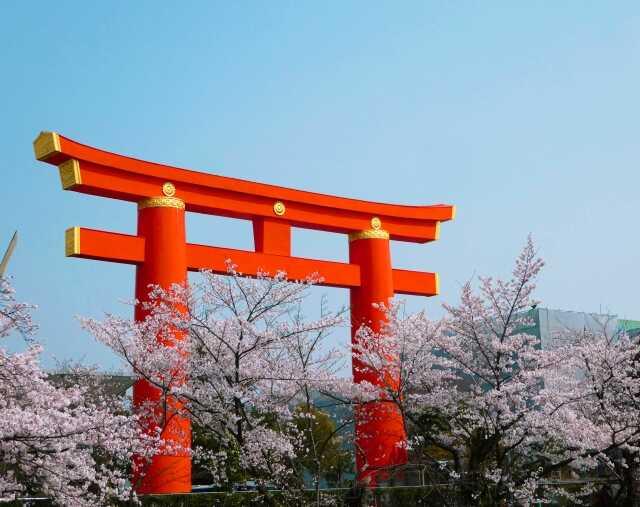 Tempat wisata di Kyoto Sakura