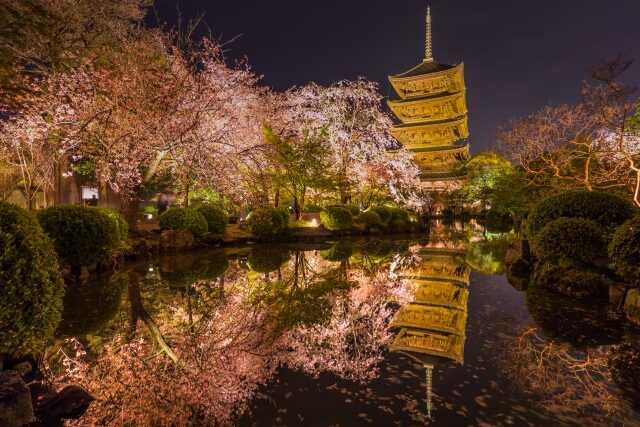 Wisata di Kyoto sakura Toji